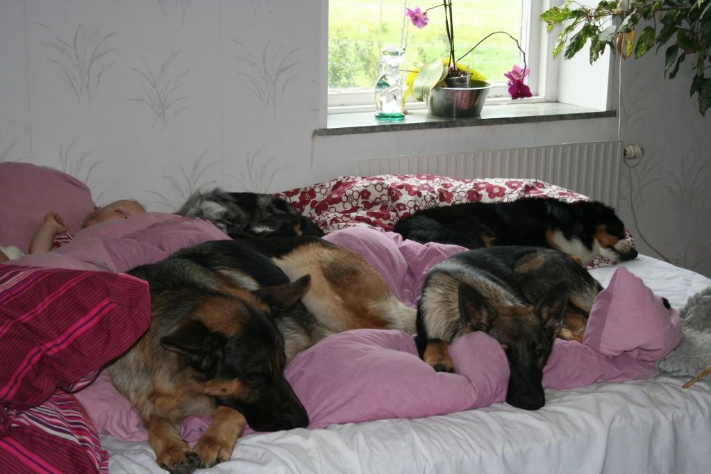 Några av familjens hundar